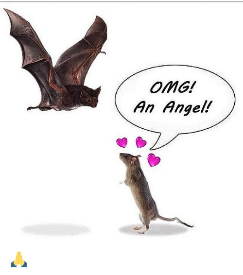 omg-an-angel-🙏-2353802